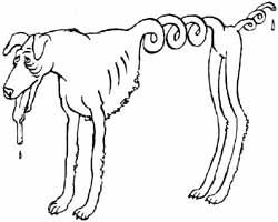 Русская самогонная (русский борзой бухаунд) где нажрется, там и спит.Новые породы собак