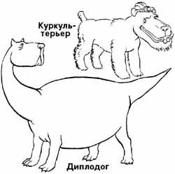 диплодог, куркуль-терьер и другие мало изученные породы собак