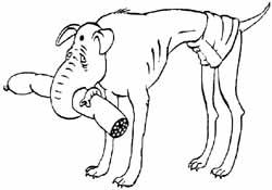 Индийская слоновая борзая
